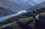 Portugal Wine Country